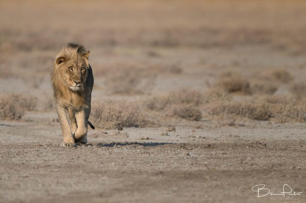 namibie_0062_050916